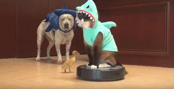 犬鮫と猫鮫とひよこ