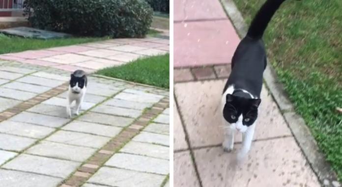 遠くから歩いてくる猫
