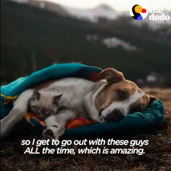 寝袋で寝る猫のバルーと犬のヘンリー