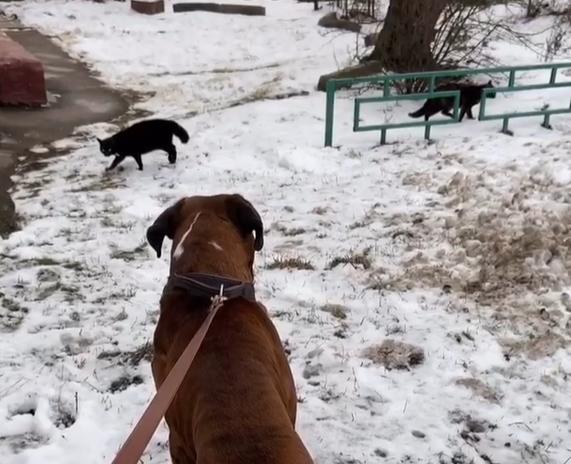 猫にもっと近づく犬