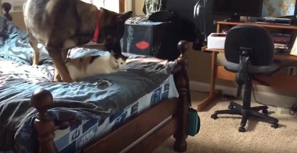 ベッドの上で横になる猫