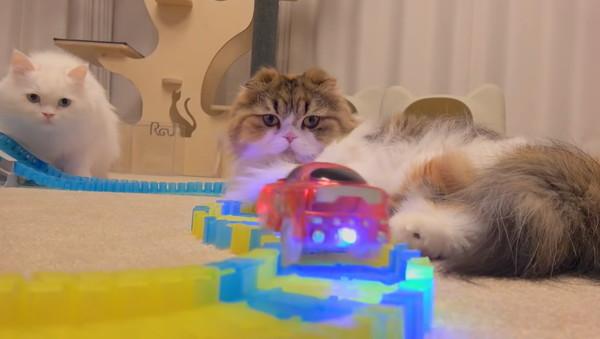 ミニカーと猫