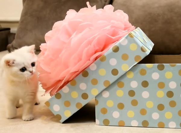 子猫とプレゼント