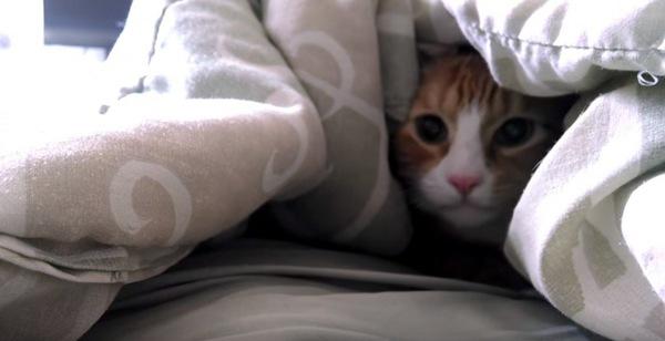 ベッドの中