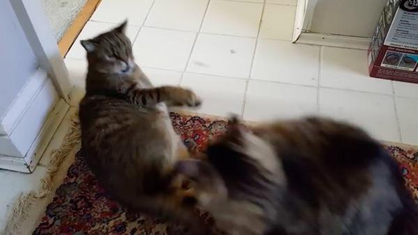 あっち行け!と猫パンチ
