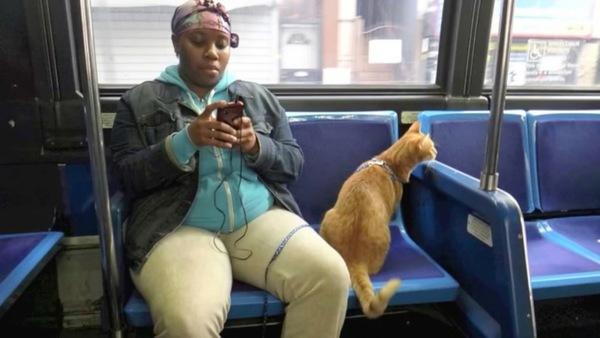 見知らぬ乗客