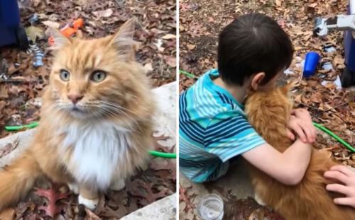 男の子を慰める猫