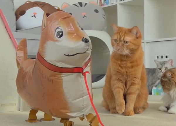 犬のバルーンを監視する猫