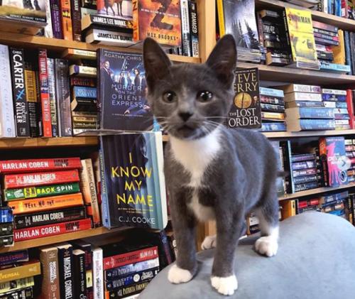 猫のいるカナダの本屋