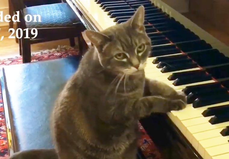ピアノのレッスンをする猫