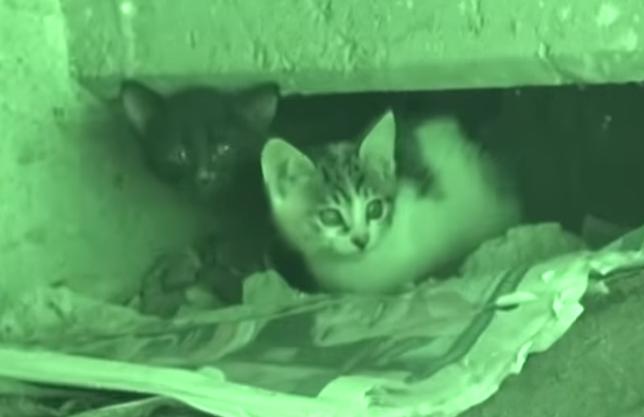 瓦礫の下で立ち往生する2匹の子猫