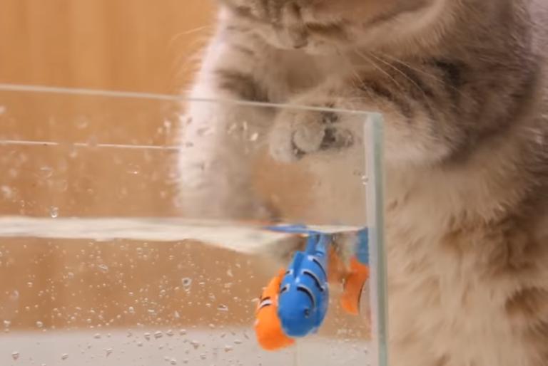 おもちゃの魚を捕まえる猫