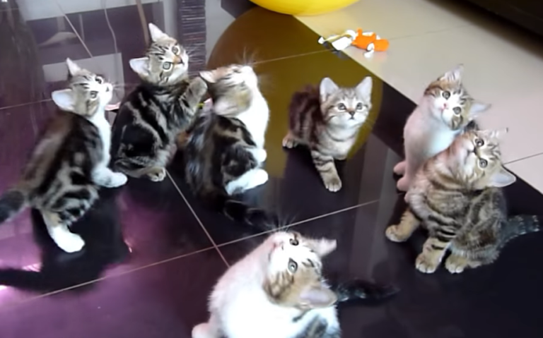 シンクロする子猫たち