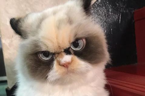 不機嫌そうな猫ミャウミャウ