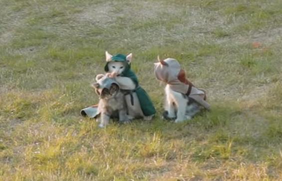 野原にいるアサシン猫達