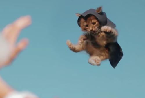 空を飛ぶアサシン猫