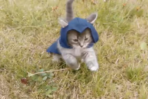 敵を追いかけるアサシン猫