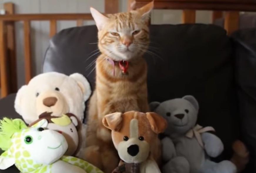 猫とぬいぐるみ