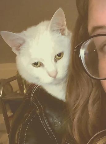 革ジャンを着た猫のアップ