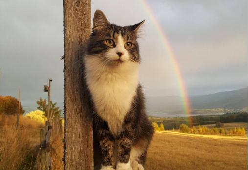 虹と猫の奇跡の一枚