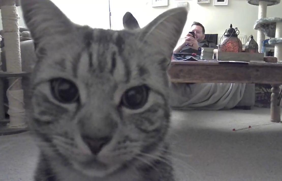 監視カメラを監視する猫
