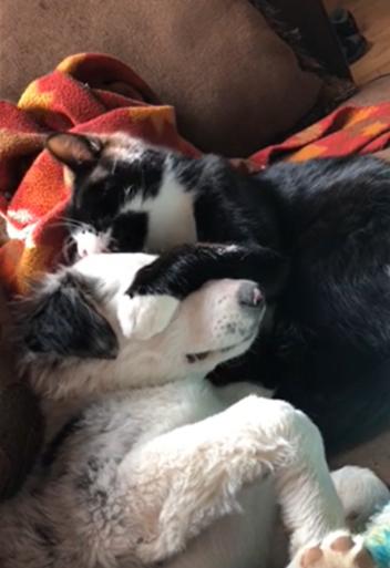 子犬を舐める猫