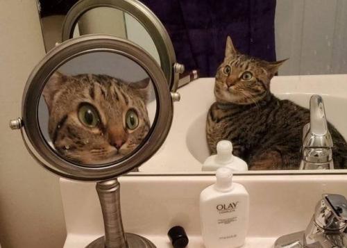拡大鏡に驚く猫