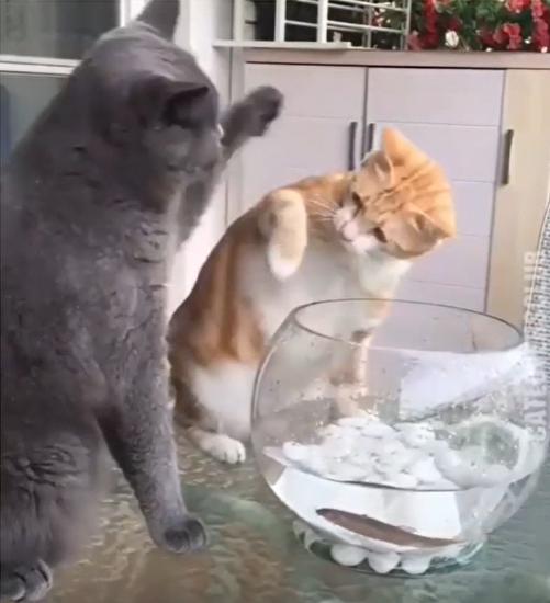 猫に叱られる猫