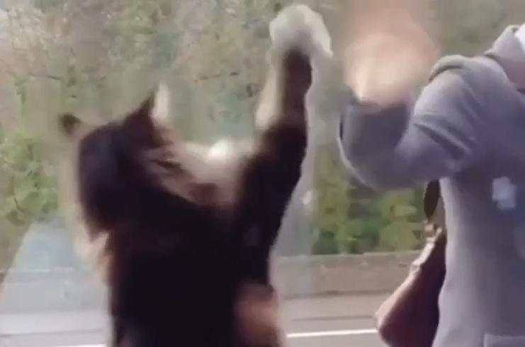 バイバイする猫
