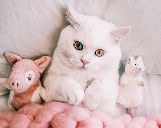 目の色が半分青い猫