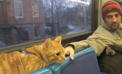 バスに乗る猫