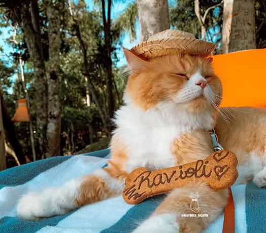 じゃらん猫のラビオリ