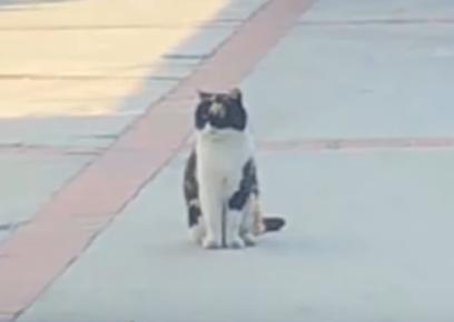 飼い主の行く手を阻む猫