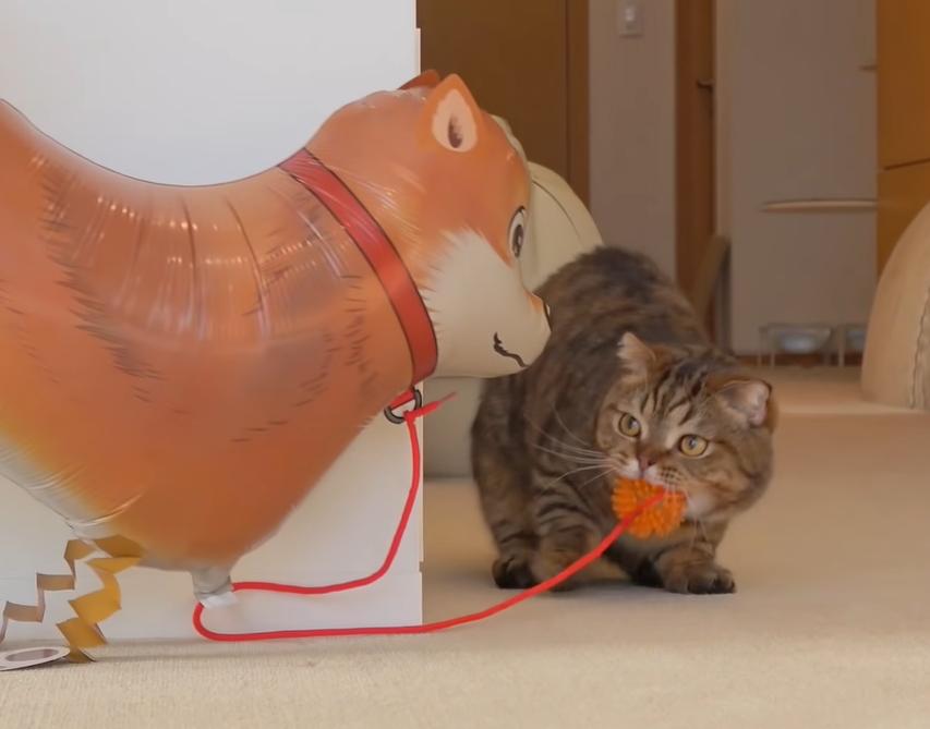 犬の風船と出会った猫