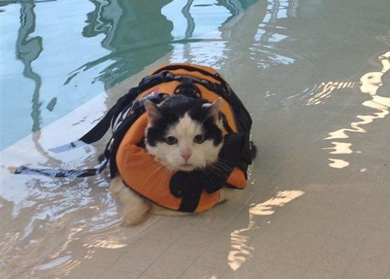 プールサイドに打ち上げられた猫