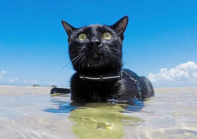 海で泳ぐ黒猫