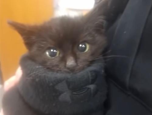 雪の中から救助された子猫