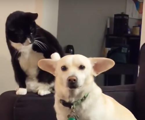 犬に猫パンチ寸前