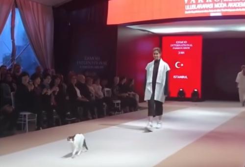 ランウェイを歩く猫