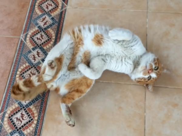 寛ぐ怪我をしていた猫