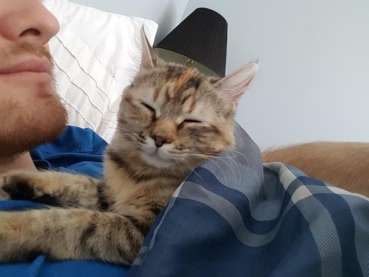 アラームで起こす猫