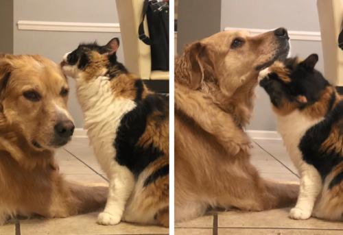 犬を労る猫