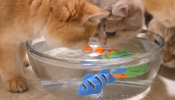 金魚鉢に入った魚のおもちゃ