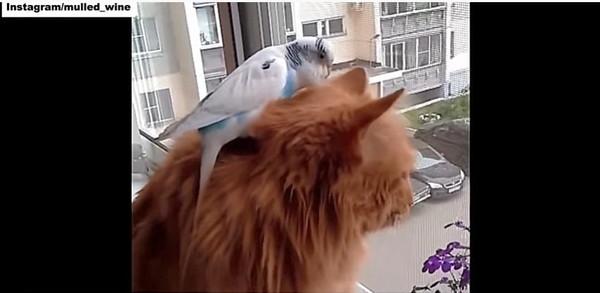 一緒に外をみる猫とインコ