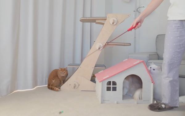 飼い主に遊んでもらう猫たち