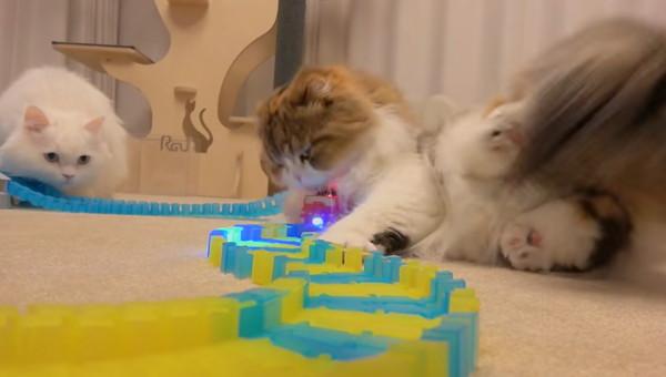 ミニカーを踏む猫
