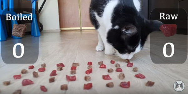 目の前の肉のニオイを嗅ぐ猫