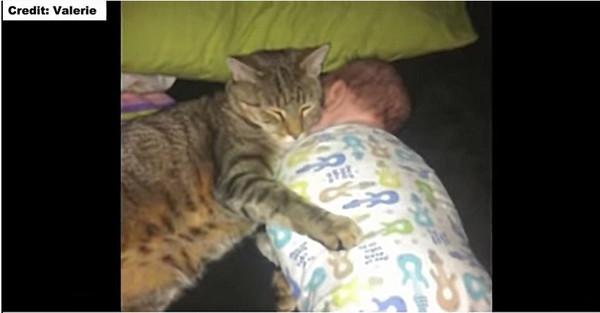 男の子を守るように眠る猫