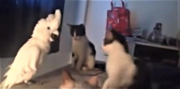オウムに興味津々な猫