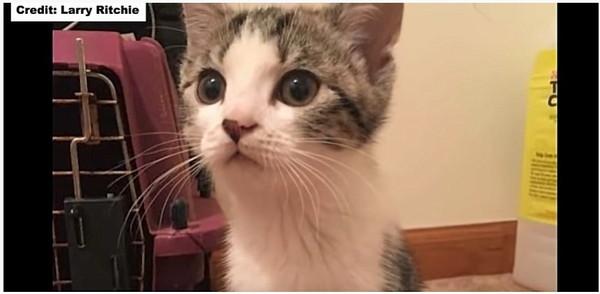 子猫のニルヴァーナの顔